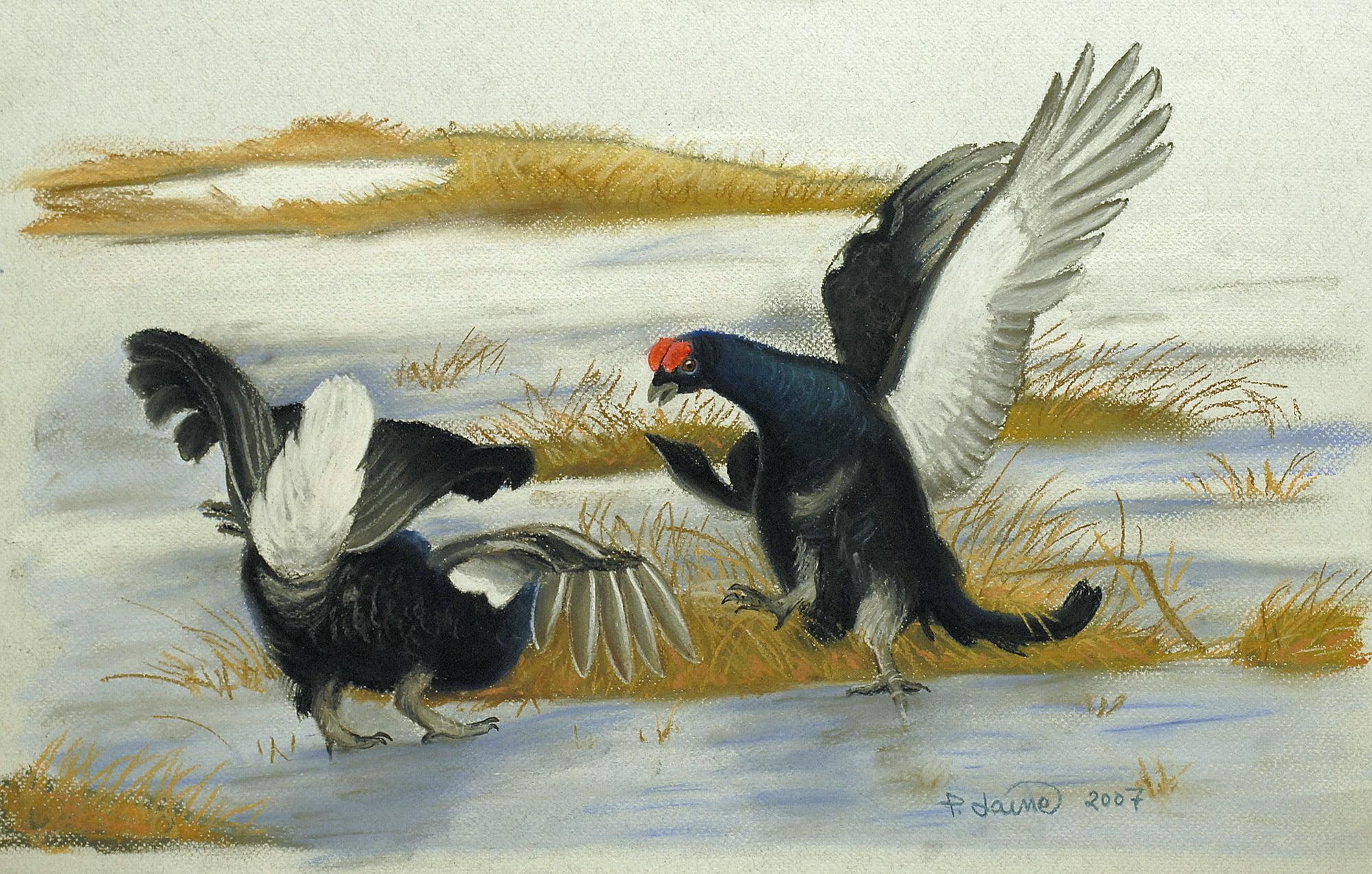 Kukkururuu (pastelli) 32 x 47